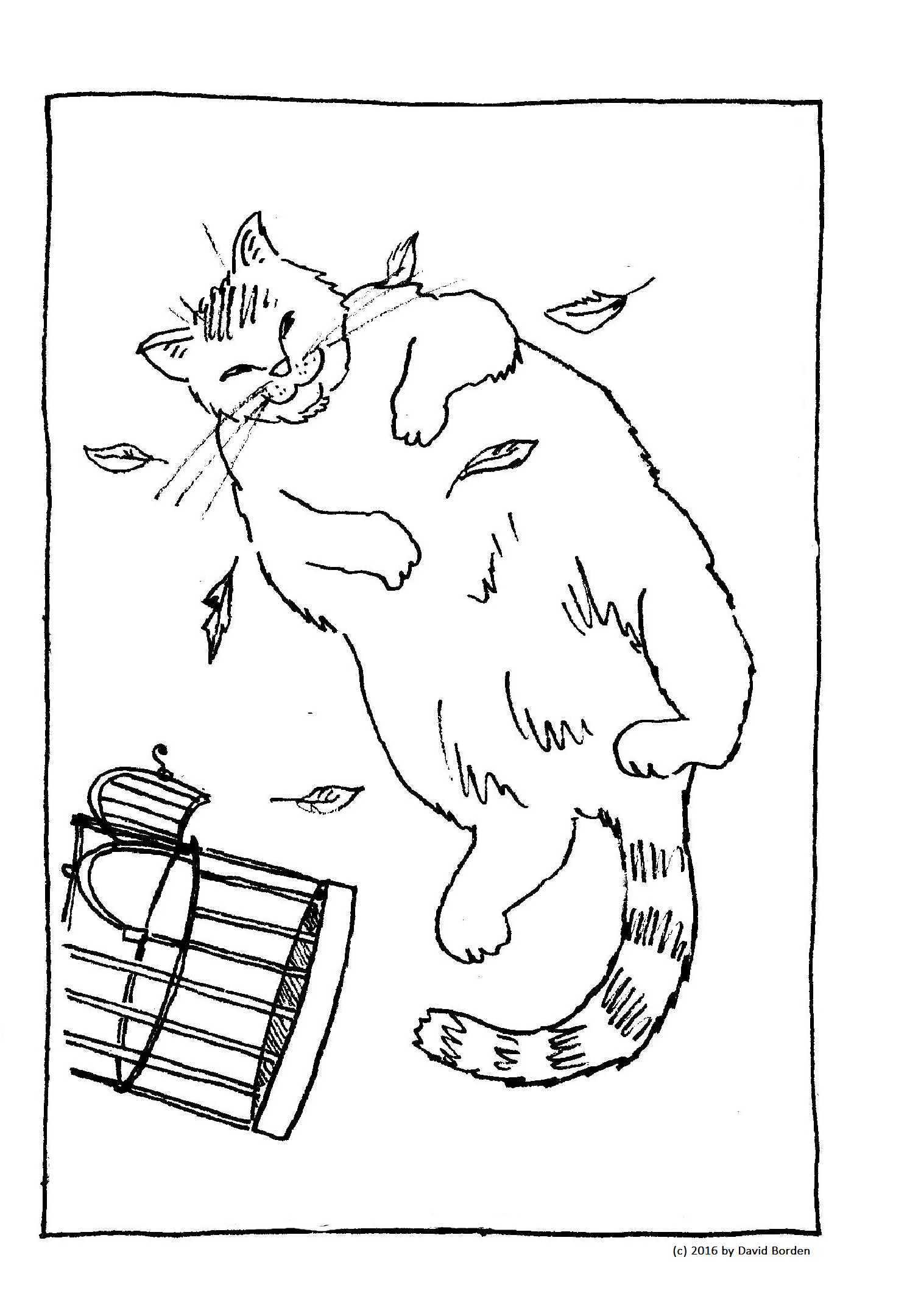 Fat Cat Box Of 10 Greeting Cards Scribblefire