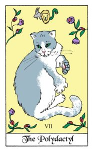 Polydactyl cat card from the White Cat Oracle deck by David Borden. Cat Divination.