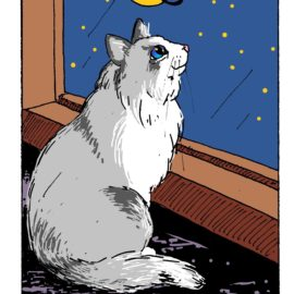Finally, You, Too, can Get the White Cat Oracle Deck